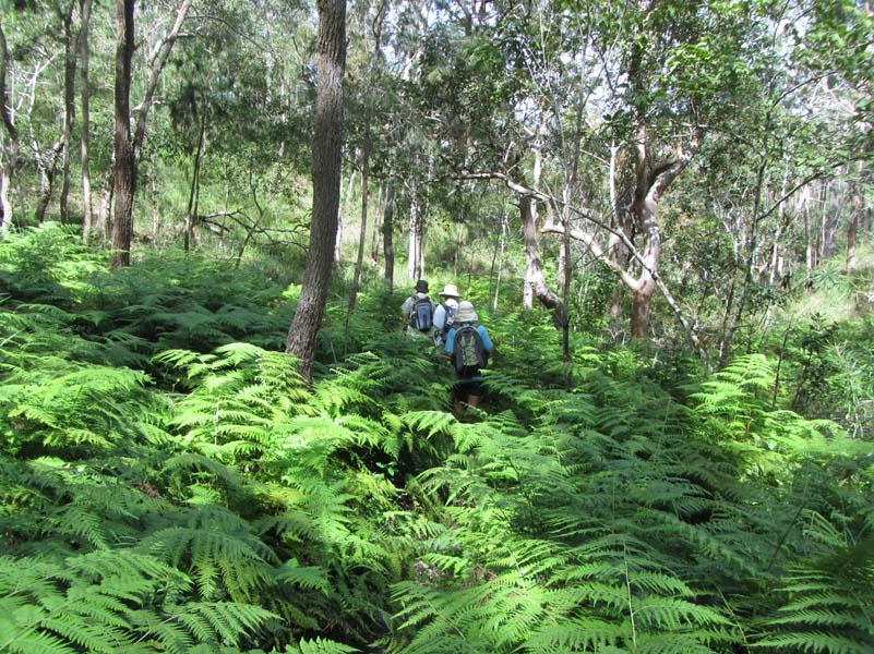 Fern Gully. Mt Emerald area